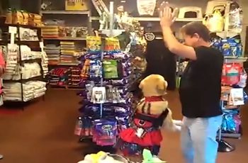This-Dog-Got-an-Amazing-Dancing-Skill-Does-Better-than-His-Owner