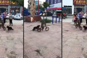 Dog-Chasing-a-Monkey-Riding-Bike-Surprises-Bystanders