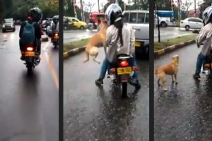 Dog-Owners-Anger-Netizens-When-They-Leave-Their-Crying-Dog-Behind