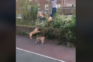 Dogs-Chased-and-Bit-Young-Man-but-Everyone-Just-Laughed-3